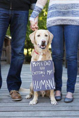 anuncio embarazo con perro